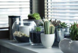 O que as plantas revelam sobre sua casa