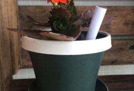 Especial Primavera: Curas com flores e plantas